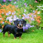 Union Jack Dog Collar - www.malulu.co.uk - Photo by Bridget Davey