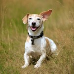 Mini Bajuni Dog Collar - www.malulu.co.uk - Photo by Bridget Davey