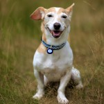 Kilifi Blue Dog Collar Mini - www.malulu.co.uk - Photo by Bridget Davey