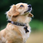 Bajuni Dog Collar - www.malulu.co.uk - Photo by Bridget Davey
