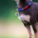 Mombasa Red Dog Collar Close Up - www.malulu.co.uk - Photo by Bridget Davey