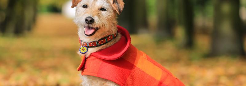 Malulu's Masai Dog Coats