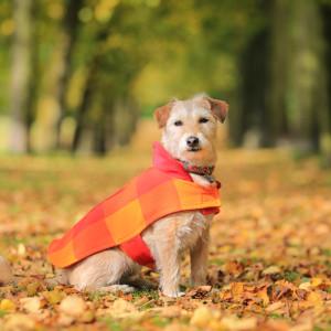 Malulu Dog Coat - Samburu Sun (www.malulu.co.uk) - photo by Bridget Davey Photography