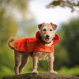 Malulu Dog Coat - Samburu Sun Medium (www.malulu.co.uk) - photo by Bridget Davey Photography