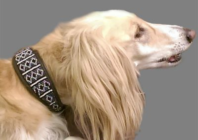Bo, the silky saluki is certainly everyone's best friend in a 'Rafiki Black' collar from Malulu Ltd - thanks again to Emma Arch.
